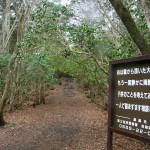 Aokigahara Forest (Suicide Forest) – The Legend of Japan's Creepy Forest