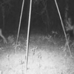 The Jersey Devil – Mysterious Beast of the Pine Barrens